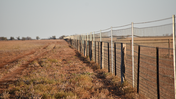 Exclusion fence