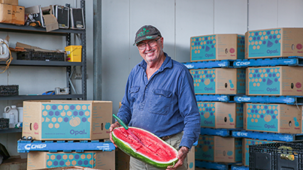 North Queensland horticulture producer Jon Caleo with a melon.