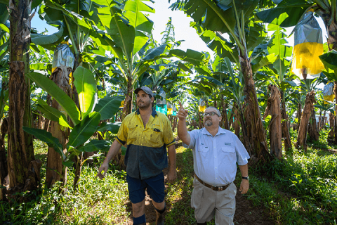 Regional Area Manager, Sam Spina discussing banana production with Ben Abbott