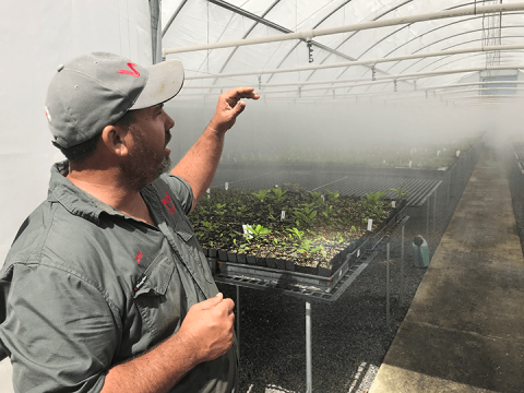 A man talks about a nursery hothouse with mist falling on plants.