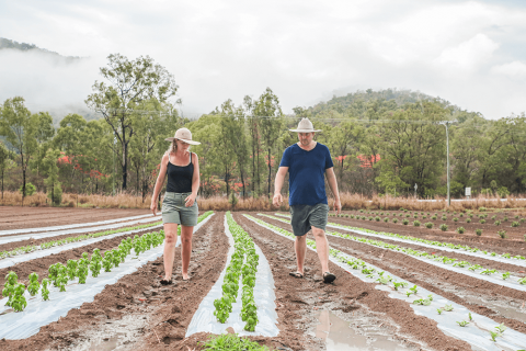 A male and female farmer walk between rows of small plants.