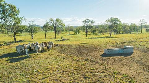Drone image of cattle resting under trees near water trough