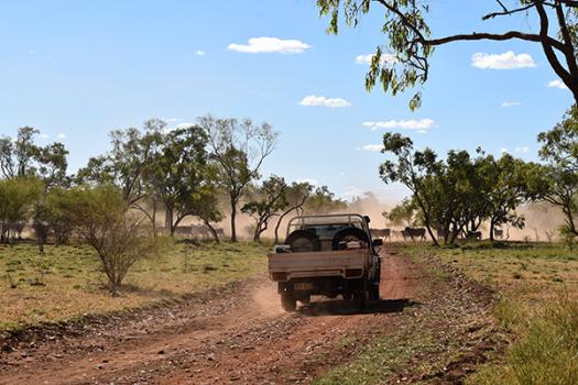 White ute driving down dirt road