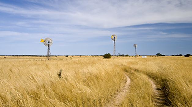Windmills in paddock