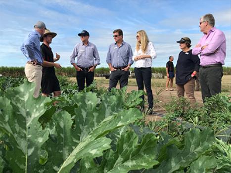 QRIDA Board standing in zucchini crop talking