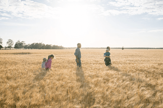Family of four walk through golden wheat field